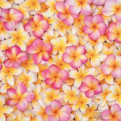 #PANDORAloves the absolutely wonderful frangipani flowers.