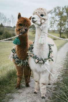 Cute Wild Animals, Baby Animals Pictures, Super Cute Animals, Cute Little Animals, Cute Animal Pictures, Cute Funny Animals, Animals Beautiful, Animals And Pets, Cute Dogs