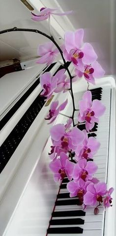 that is also the same with piano playing. The piano is a very special musical instrument and almost every individual desire to play it. But before you can play the pian Piano Keys, Piano Music, Sound Of Music, Music Is Life, Capa Do Face, Musica Love, White Piano, Black Piano, Jesus E Maria