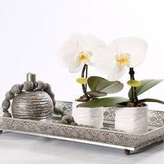 Inspiratie, Phalaenopsis < EIGEN CREATIES   optiflor.nl #Pintratuin
