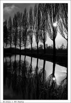 Poplars! Beautiful.......... Follow Now: http://www.pinterest.com/chiranjitpaul/