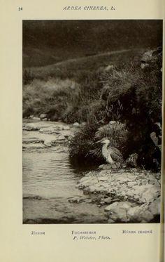 1910  /  No. 24 - Wild birds at home / - Biodiversity Heritage Library