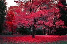 Learn how to looks better and beautiful on photos.Check my methods how i start looking beautiful and slim in front of cameras Pink Trees, Red Tree, Colorful Trees, Canadian Leaf, Magical Tree, Enjoy Your Life, Favim, Science Nature, Pretty In Pink