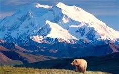 Denali National Park, Alaska! #Bucketlist #BigBlueNation #Wanderlust