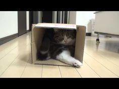 箱とねこ13。-Box and Maru 13.-
