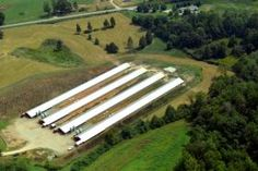 """Agriculture is one of the greatest polluters of waterways. A current trend is passage of bills by GOP State legislators protecting polluters: NC's annual farm bill addresses fertilizer regulations, landscapers, and the legal definition of """"planting and harvesting season."""" Environmental groups say one provision of the bill shields the industry by preventing pollution complaints from becoming public, while CAFO owner NC Senator Dixon argues the provision protects CAFOs from overzealous…"""