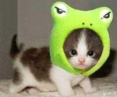 Super cute pictures of animals. Super cute pictures of animals. Super cute pictures of baby animals. Adorable Cute Animals, Cute Baby Animals, Funny Animals, Funny Cats, Cutest Animals, Animal Babies, Funniest Animals, Silly Cats, Small Animals