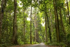This is the road to O'Reilly's Rainforest Retreat. 17 Amazing Places To Go On The Gold Coast That Aren't The Beach Caravan Hire, Beautiful Places, Amazing Places, Tasmania, Countries Of The World, Australia Travel, Gold Coast, Where To Go, East Coast