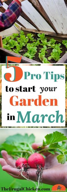 Itching to get your garden started? Here's 5 pro tips to start your garden this March - even if you don't have a green thumb! Foolproof directions!