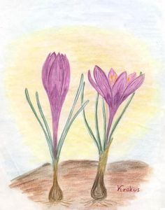 ML pages botany Rudolf Steiner, Plant Painting, Painting & Drawing, Drawing Lessons, Art Lessons, Chalkboard Drawings, Arts Integration, Nature Study, We Can Do It