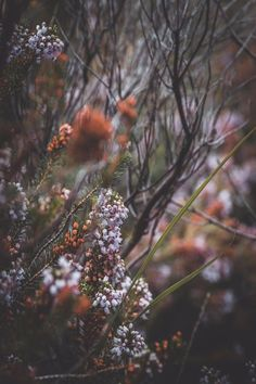 """maureen2musings:  """"  Heather and twigs  wecollectskies  """""""