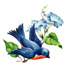 Remind me of my tattoo - a bluebird and a heavenly blue morning glory in memory of my mom - two of her favorite things! JK