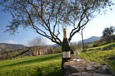 Champagne Delamotte Blanc de blancs dans le jardin des Chaix, en Ardèche.