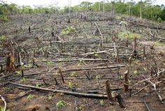 This shows deforestation because it is a picture of a forest that has been destroyed, or deforested.