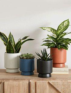 garden Modern Planters, Outdoor Planters, Indoor Outdoor, Ceramic Planters, Planter Pots, Objet Deco Design, Concrete Bowl, Unique Centerpieces, Snake Plant