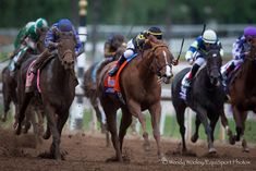 Judy The Beauty Prevails in Photo for 2014 Filly & Mare Sprint - Horse Racing News   Paulick Report Breeders Cup Classic, Farm Photography, Racing News, Thoroughbred, Horse Racing, Horses, Animals, Fine Art, Beauty