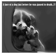 Gas chambers just like Hitler. Animals are defenitly living the holocaust