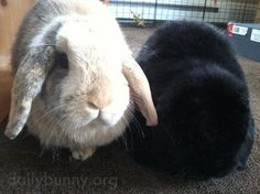 Can we have some treats? - April 26, 2015