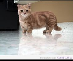 Munchin kitty!!! WANTS!!!!