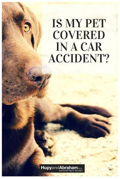 #Blogpost - In a perfect world, you wouldn't have to worry about your pet's safety and well-being in the aftermath of a car accident. But because accidents do happen, there are a few things (like insurance) to consider if your pet is injured in an automobile accident. Read what the automobile accident attorneys at Hupy and Abraham have to say about accidents with pet passengers!