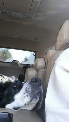 When I drive, Dayzi can't quite seem to get close enough...