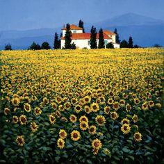 Sunflower Field by Steve Thomas