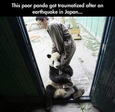 Traumatized panda…and yet another reminder that animals have feelings.