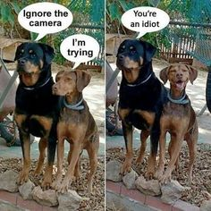 Ignore The Camera Dog | Funny Joke Pictures