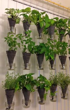 A suspended vertical garden 1 column made of 3 by CityFarmsOrganic (2 columns needed for each side of kitchen window) will measure