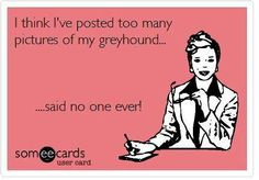 lol- I could post and talk all day about my wonderful greys- there is nothing like the love of a greyhound.....xxoo