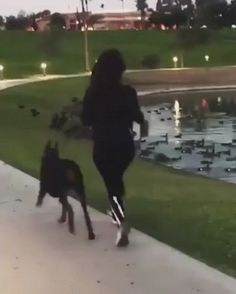 """""""Oh look, geese"""" – Gif"""