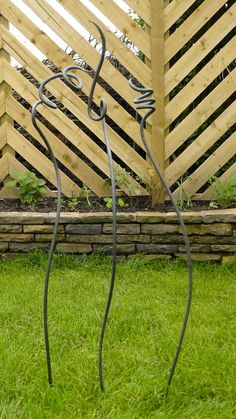 Sweet Pea garden stakes Iron room divider,  front yard; combine with cardinal flower, monks hood may to sept vines