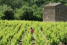 """Le Gard rhodanien a récemment obtenu la labellisation """"Vignobles et Découverte"""" Le Gard, Vineyard, Plants, Outdoor, Outdoor Gardens, Tourism, Outdoors, Plant, Outdoor Games"""