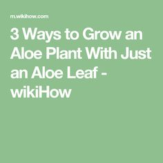 3 Ways to Grow an Aloe Plant With Just an Aloe Leaf - wikiHow