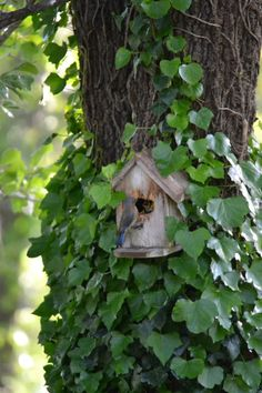 "coisasdetere:  "" Bird house. Mommy feeding babies…  """