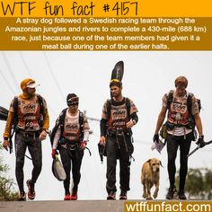 Stray dog follows a racing team for 430 miles - WTF fun facts