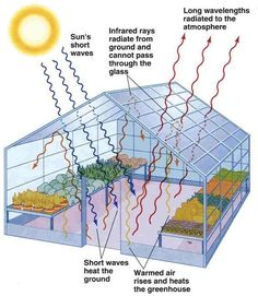 The Greenhouse Effect #conservatorygreenhouse #greenhouseeffect