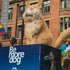 Don't think my #cats would agree with this O2 promotion. But hey. Whatever. #mancspride