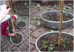 DIY garden support teepees! Made in containers for easy mobility!