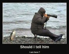 funny penguin picture