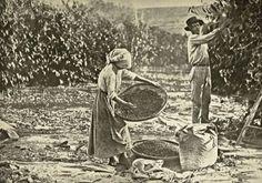 São Paulo - Conheça seu Estado (História e Geografia): 39 - A imigração e o trabalho assalariado no sécul...