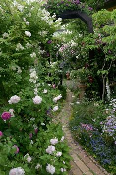 オープンガーデン|Nora レポート ~ワンランク上の庭をめざして~-27ページ目