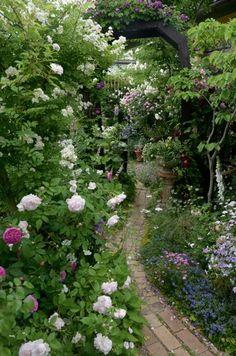 オープンガーデン|Nora レポート ~ワンランク上の庭をめざして~ -27ページ目