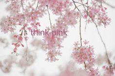 <3 pink pink pink