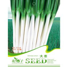 80pcs Green Chinese Onion Scallion Spices Vegetable Seeds Garden Allium Fistulosum
