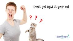 Don't Get Mad at Your Cat! @easyologypets