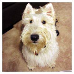 The Dougall Diaries: Somedoggy has made my peep sad...