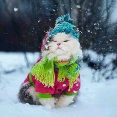 Niet koud
