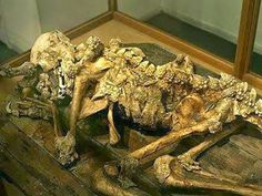 """Reptilian Conspiracy: Tracking Down The Mysterious Fossilized Remains of an Ancient """"Dragon Man"""""""