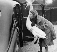 Mujer queriendo meter a la Oca en un coche antiguo